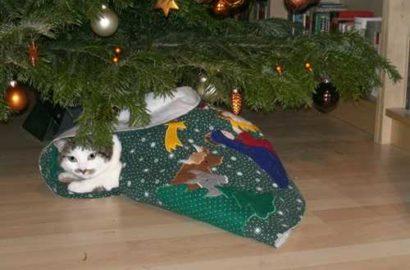 weihnachtslily