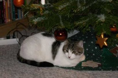 weihnachtsqueenie
