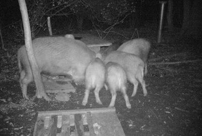 2015_02160100-wildschweinfamilie