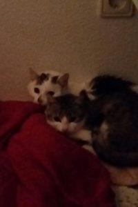 cat-und-whity