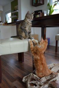 kate-und-freund