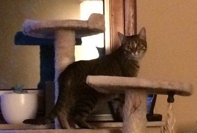kitty-im-neuen-zuhause-2